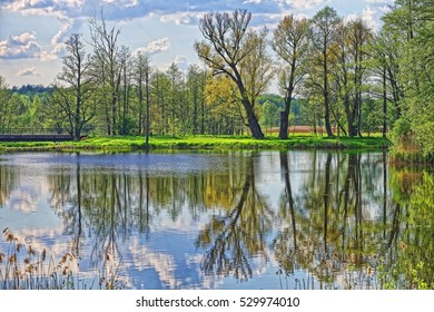 Trees mirrored at a pond in Bialowieza National Park as a part of Belovezhskaya Pushcha National Park in Poland.