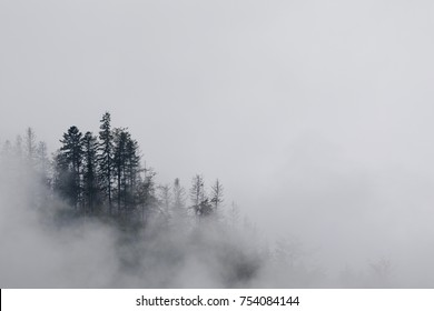 trees in mist