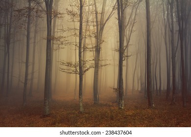Trees in the mist during autumn
