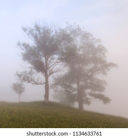 trees in the mist at the morning mountains landscape