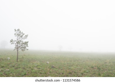 Trees in Mist near the Lake Baikal.