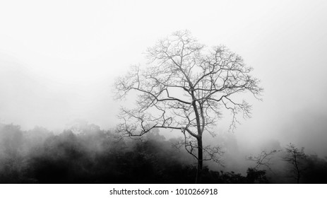Trees and Mist in the winter