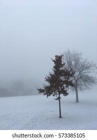 Trees in mist in winter - Shutterstock ID 573385105