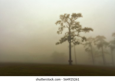Trees and Mists