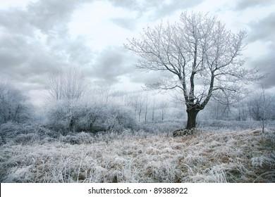 Trees in misty, gloomy winter day. Pasterka village in Poland. Beginning of winter.