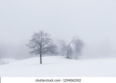 Trees in moody foggy winter landsacpe
