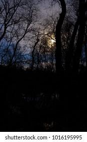 683080c327 Trees with moonlight in heather landscape Dwingelderveld, the Netherlands