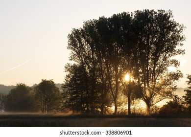 Trees at Morning