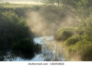 Trees in the morning mist by the river