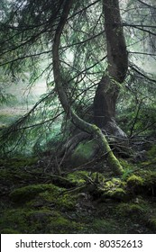 trees with moss in magic light and haze in background