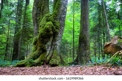 trees with moss in midnight
