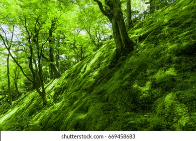 Trees and mosses on a slope