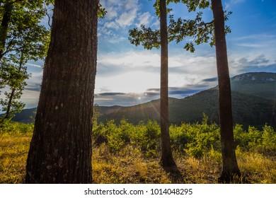 Trees at Mountain Bükk