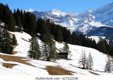 Trees and mountains in an alpine, winter setting.