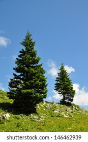 Trees in the Mountains of Austria