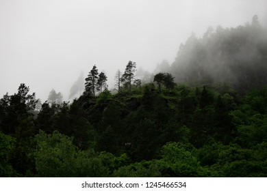 Trees in the mountains in the fog
