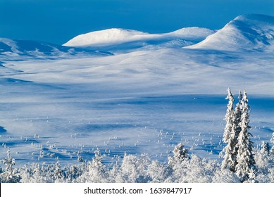 Trees and mountains in snowscape. Grövelsjöfjällen, Sweden.