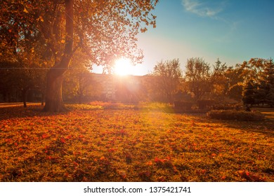 Trees with multicolored leaves on the grass in the park. Maple foliage in sunny autumn. Sunlight in early morning