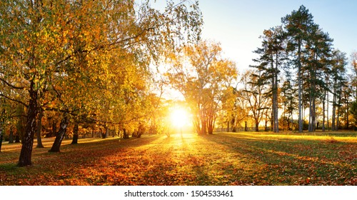 Trees with multicolored leaves on the grass in the park. Maple foliage in sunny autumn. Sunlight in early morning in forest