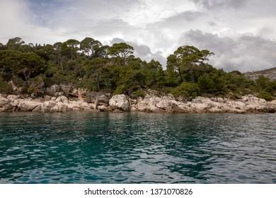 Trees and nature at Lokrum Island Coast, Dubrovnik, in Croatia