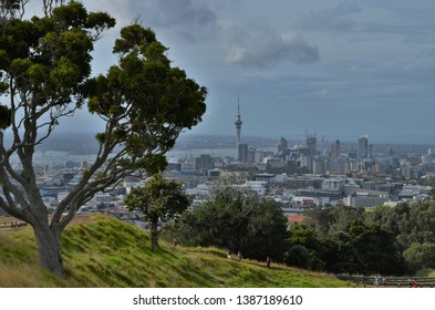 trees and nature on Mount Eden in Auckland, New Zealand