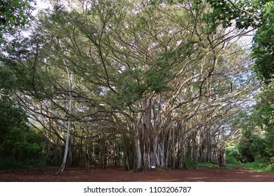 Trees Nature Walk