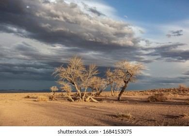 trees in a nature of western Mongolia