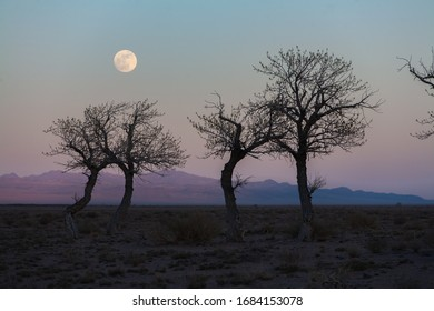 trees in a nature of western Mongolia in the evening