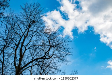 The trees on background of the sky
