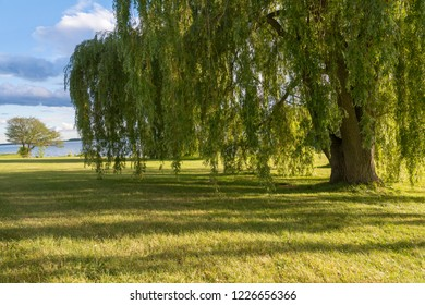 trees on the bank of the St. Lawrence River on Woodlands Island in Canada during a summer day