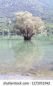 trees on the  Barrea lake, Abruzzo, Italy