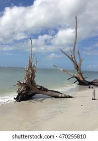 Trees on beach