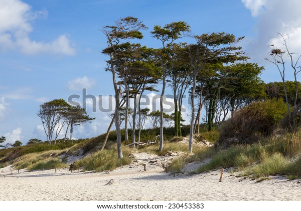 trees on a beach