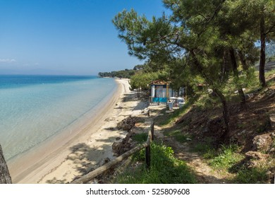 Trees on the beach with blue waters in Thassos island, East Macedonia and Thrace, Greece