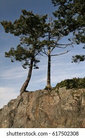 Trees on cliff
