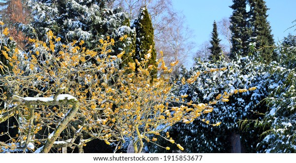 trees-on-cold-winter-day-600w-1915853677