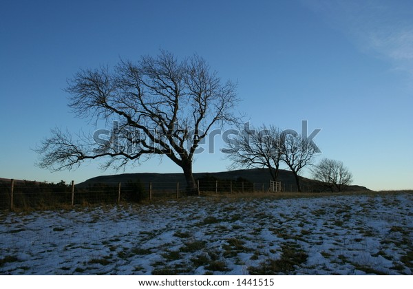 Trees on the edge of a field in winter on Kippen Muir, Stirlingshire
