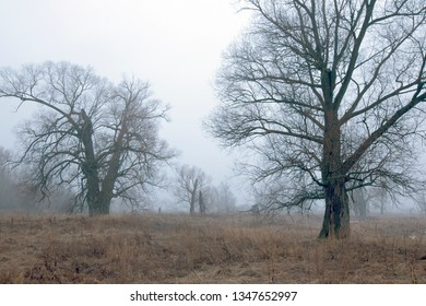 trees on a field at dusk in November