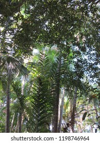 Trees on forest of Sacaca Museum, Macapa, Brazil