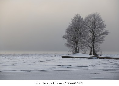 Trees on a frozen lake.