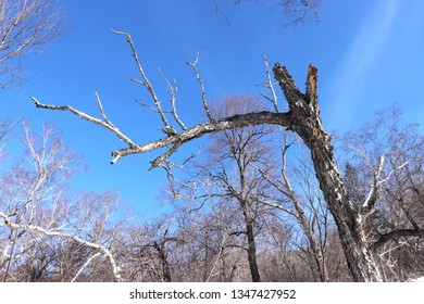 Trees on the grassy hills under the blue sky