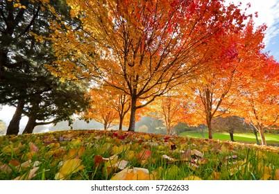Trees on grassy knoll