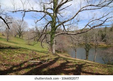 trees on green hill near lake