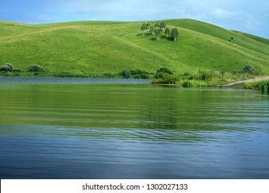 Trees on a green hill near the water on a sunny summer day