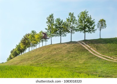 Trees on hill with path