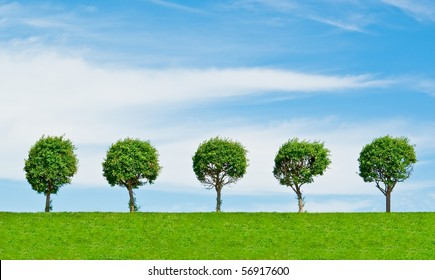 Trees on hill in row