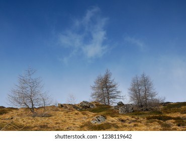 Trees on a Hill in Valle di Viso in front of a blue cloudy sky