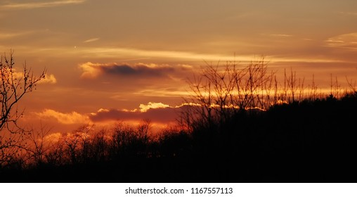 trees on a hillside being silhouetted by a beautiful orange sunset