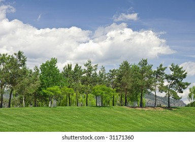 trees on a hillside lawn