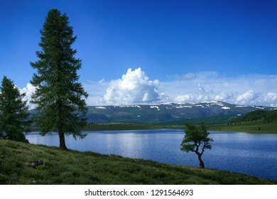 Trees on the lake, mountains in the distance and white clouds in the blue sky. Beautiful view in the Altai Republic in Russia